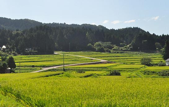 石川県産のお米